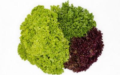 Podívejte se na nabídku našich čerstvých salátů